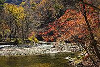 河流两侧的枫树林