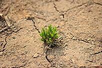 黄土地上的绿草贴图