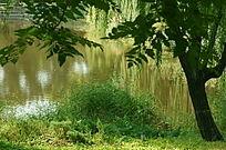 水边的树木和青草