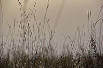 单色草上的水珠