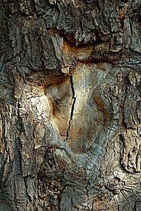 高清树干纹理
