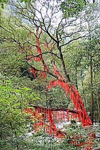 红色丝带许愿树