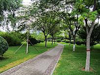 美丽的焦作人民广场绿化