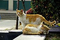 为老猫遮挡阳光的小猫