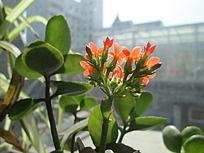 阳光下的红花绿叶