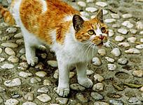 眼睛瞪大的小黄猫