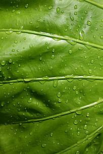 绿色叶子背景