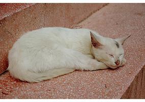 趴在阶梯上睡觉的白色猫咪