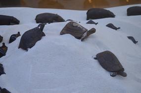 乌木乌龟木雕工艺品