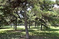 阳光下的树木草地