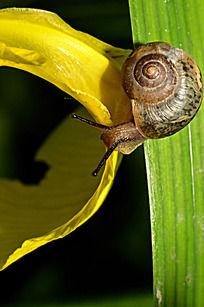 高清树叶与蜗牛