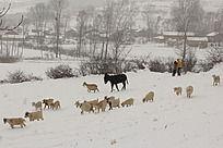 冬天放羊的人