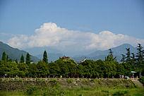 都江堰森林植被