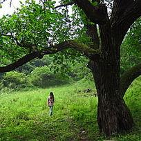 大树下女孩的背影