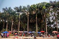热带地区的树林