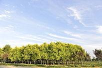 蓝天白云绿树绿草地
