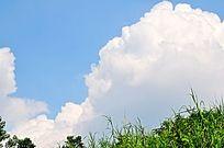 草尖上的白云