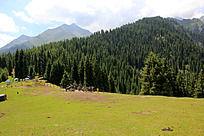 草原森林山脉风景