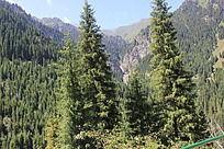 高山峡谷森林树木自然风景
