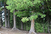茂盛的森林