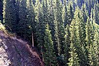森林树木阳光