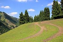 实拍天山草原森林风景