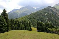 天山风景草原森林