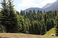 天山森林风景