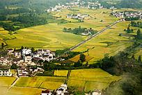盆地稻谷金黄