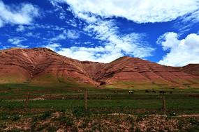 青藏高原上光秃的山峰吃草的牛群