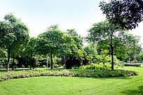 园林树木草地