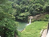 鼎湖山树林河流图片