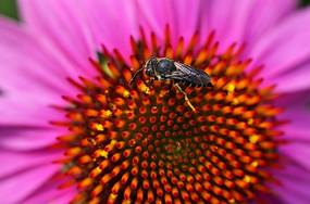 高清昆虫和花卉