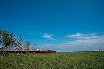 广袤草原上的树木小房和蓝天白云