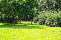 绿色的草地和小树