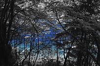 九寨沟里的蓝色湖泊
