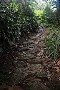 草丛中的小路