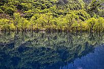 九寨沟蓝色湖泊里的倒影