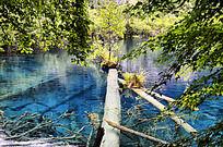 九寨沟蓝色湖泊里的枯木重生