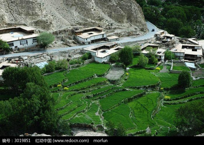 西藏高原绿色梯田图片