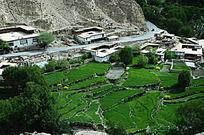 西藏高原绿色梯田