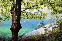 大树下的蓝色湖泊