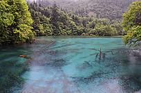 蓝色湖泊里密布的枯木