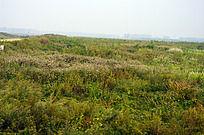 辽河湿地植被