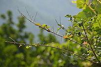 烈日下的小树枝