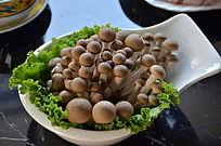 美味的蘑菇