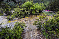 树林间的钙化池