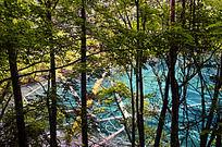 树林掩映下的九寨沟蓝色湖泊