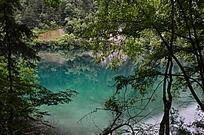 树木后的蓝色湖泊