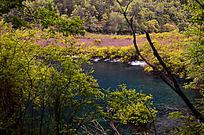 树正沟灌木丛里的蓝色湖泊